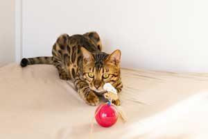 猫のおもちゃ(概要)