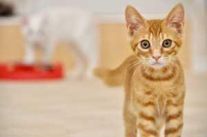 猫の体調管理していますか?体調の異変に気付くために日々気を付けておくポイント。