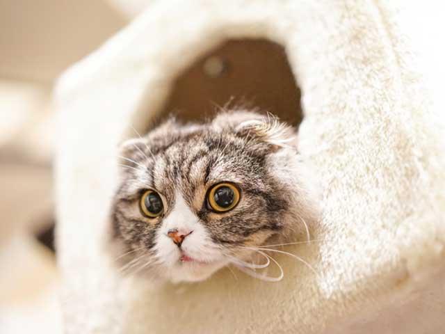 猫のしつけ【概要】