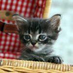 猫の為に揃えたい猫グッズ【概要】