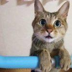 猫と遊ぶ 番外編