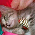 猫が喜ぶ市販のおもちゃ