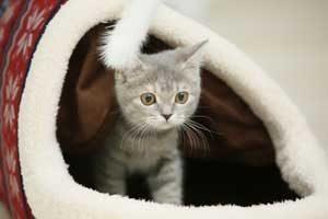 ペットショップで猫と出会う。ペットショップで猫を買う事は是か非か。