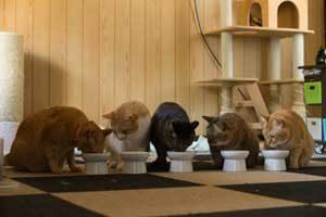 沢山の猫が待っている!里親募集のサイトで運命の猫を見つけて里親になる。