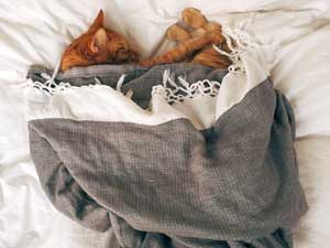 猫と暮らすイメージを膨らませて