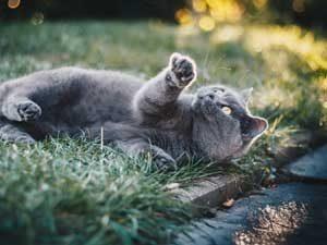 鳴かない猫