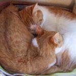 おすすめ猫ベッド