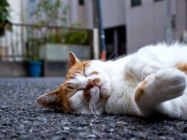 猫の暑さ対策と便利グッズ