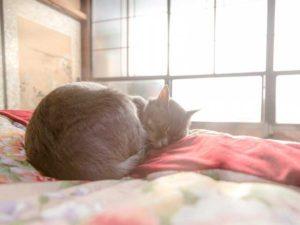 猫の寒さ対策と便利グッズ