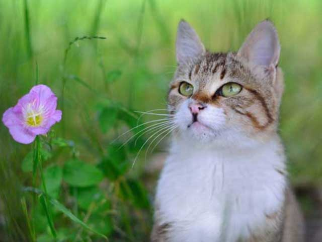 猫種による猫の特徴