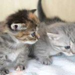 保健所(動物愛護センター)から猫をもらう