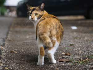 猫は死を迎える時自ら姿を消す・・・という習性