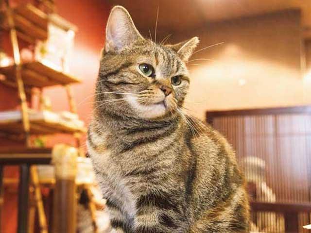 猫と泊まれるお宿を探す