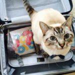 猫と旅する事