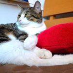 旅行時の猫のお留守番方法