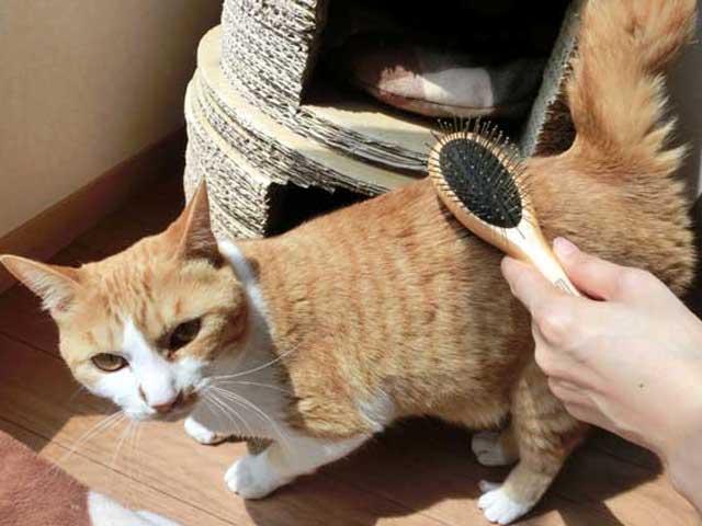 猫のグルーミング(ブラッシング)