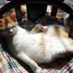 猫の好きな寝床