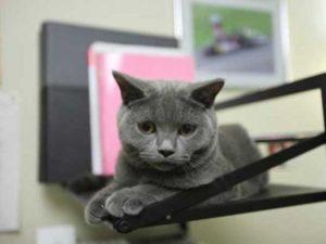 猫の住みやすい環境(概要)