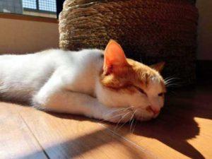 猫の習性からくる動作
