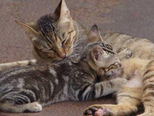 猫の感情表現(概要)