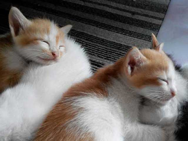 猫を2匹以上飼う時の準備