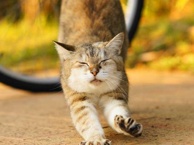 猫サイトのおすすめ