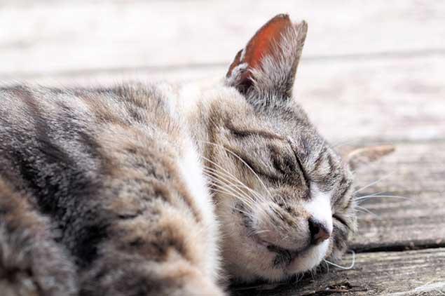 猫の保護活動