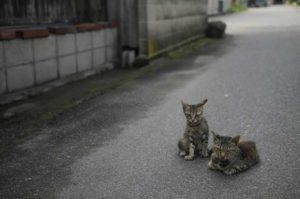 日本の猫事情(概要)