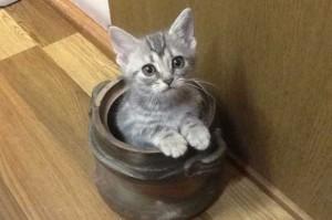 もっと猫を知る(概要)