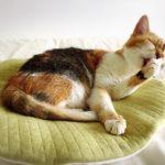 猫の抜け毛対策と便利グッズ