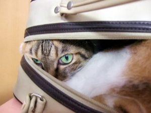 災害時、猫との避難