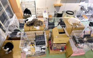 猫カフェ店内が緊急シェルターに 熊本地震