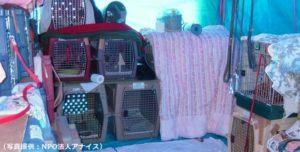 2004年潟県中越大震災 ペット用テント