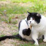 猫の耳ケア