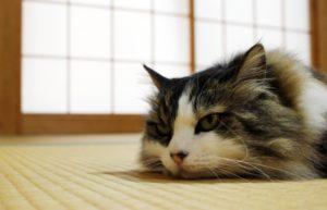 猫が出演する映画(邦画編)