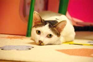 猫と暮らそう!保護施設から里子にもらった時の体験談。
