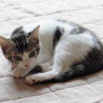 体験談「仔猫を保護する」