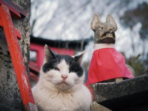猫にまつわる神社