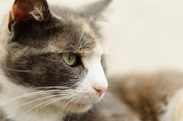 ラベルになった猫達 日本酒編
