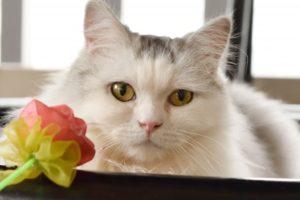 猫が出演する映画(洋画編)