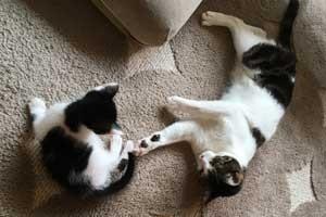猫 乳飲み子