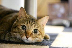 猫と災害について考える