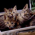 動物愛護に熱心な有名人の方達と支援団体