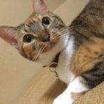 猫のニキビ