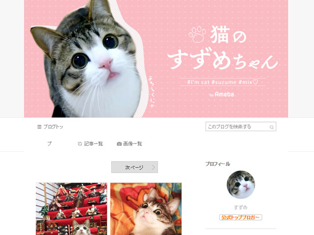 SNSで人気の「猫のすずめちゃん」が気になる