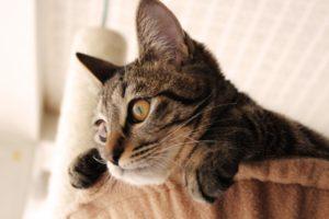 猫の行動を見守る、webカメラ