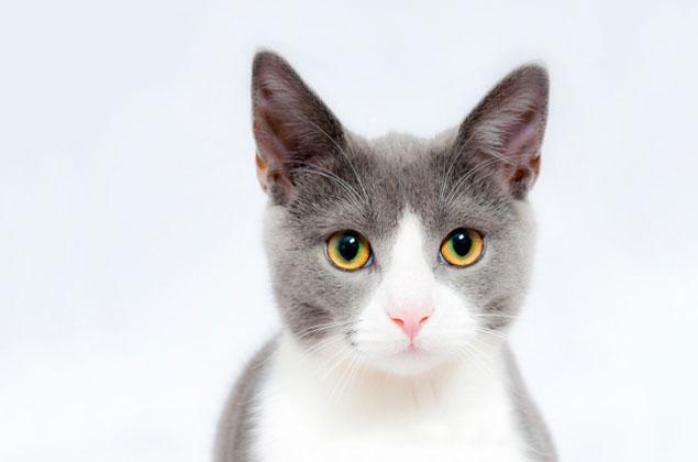 供血猫の存在を知っていますか。
