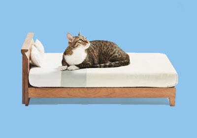 【立野木材工芸株式会社】Raffine Bed for cat