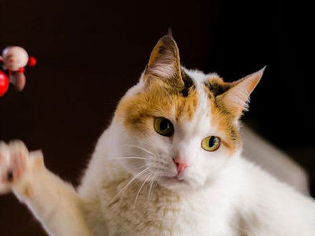 猫の適正体重はどれくらい?