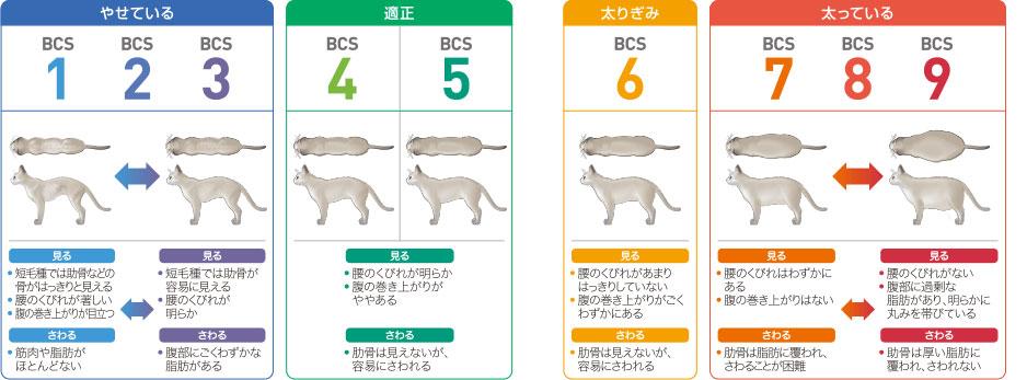 BCS(ボディコンディションスコア)